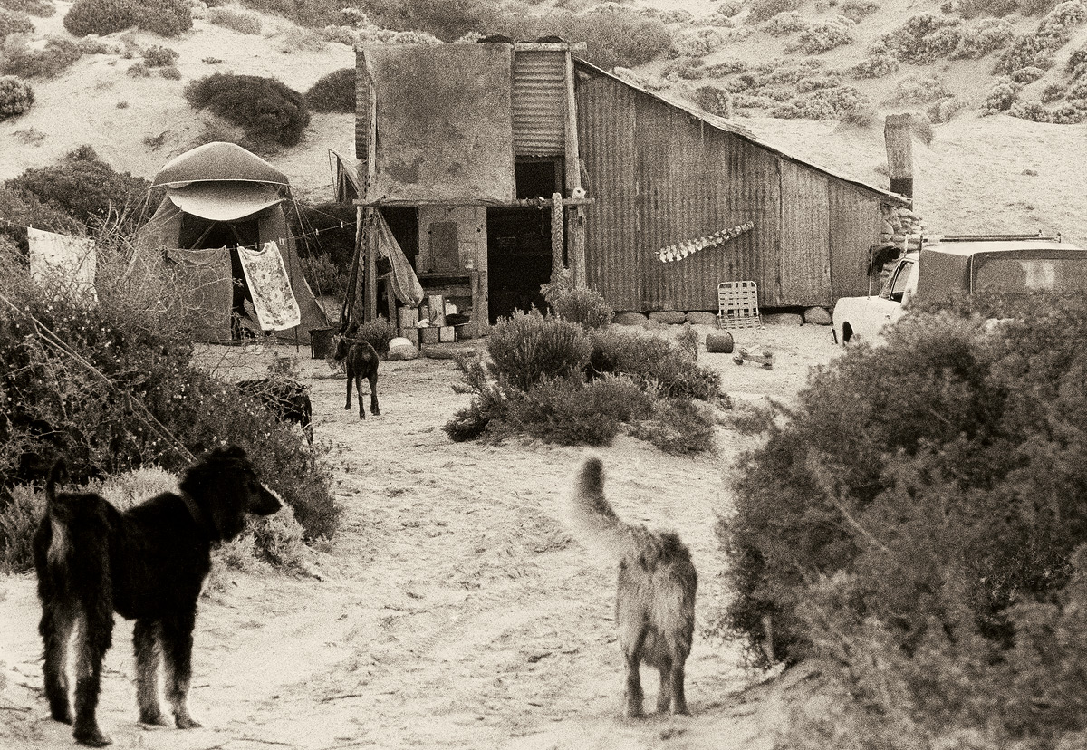 Dogs at Cactus, 1975 by John Witzig