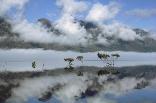 Reflections, mists and Melaleuca trees in a serene Lake Pedder, Tasmania, 1968 Olegas Truchanas