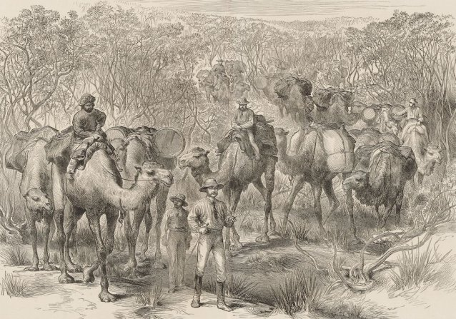 The Australian exploring expedition travelling through scrub (from the Illustrated London News 1879)