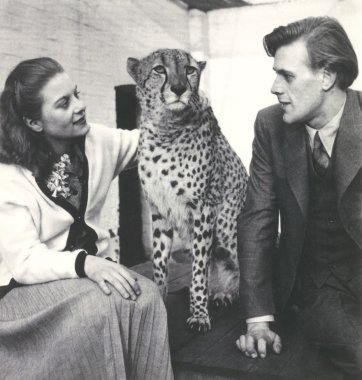 Pat and Richard Larter with Prince the cheetah at London Zoo, 1953